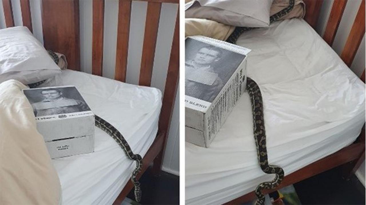 جا خوش کردن یک مار در تختخواب زن بدشانس