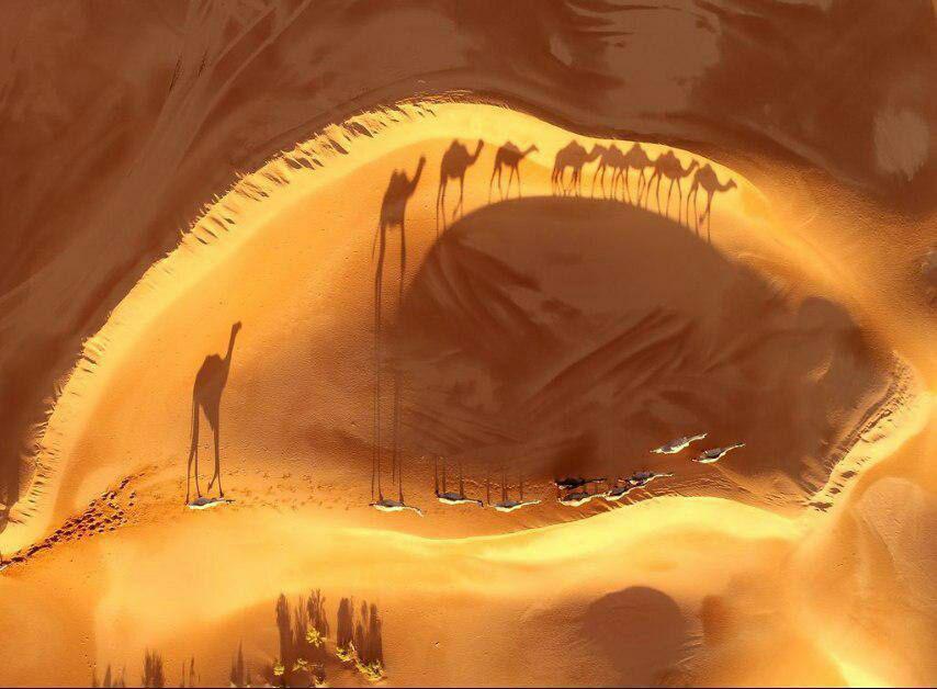عکس: عبور شترها در عکس روز نشنال جئوگرافیک