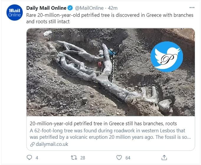 درخت ۲۰ میلیون ساله در یونان کشف