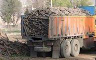 اتهام ۶ زن به قاچاق چوب در مازندران