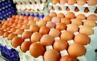تشریح اقدامات انجامشده برای ثبات بازار تخممرغ