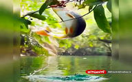 تصویر بی نظیر از پرش و میوه خوردن ماهی
