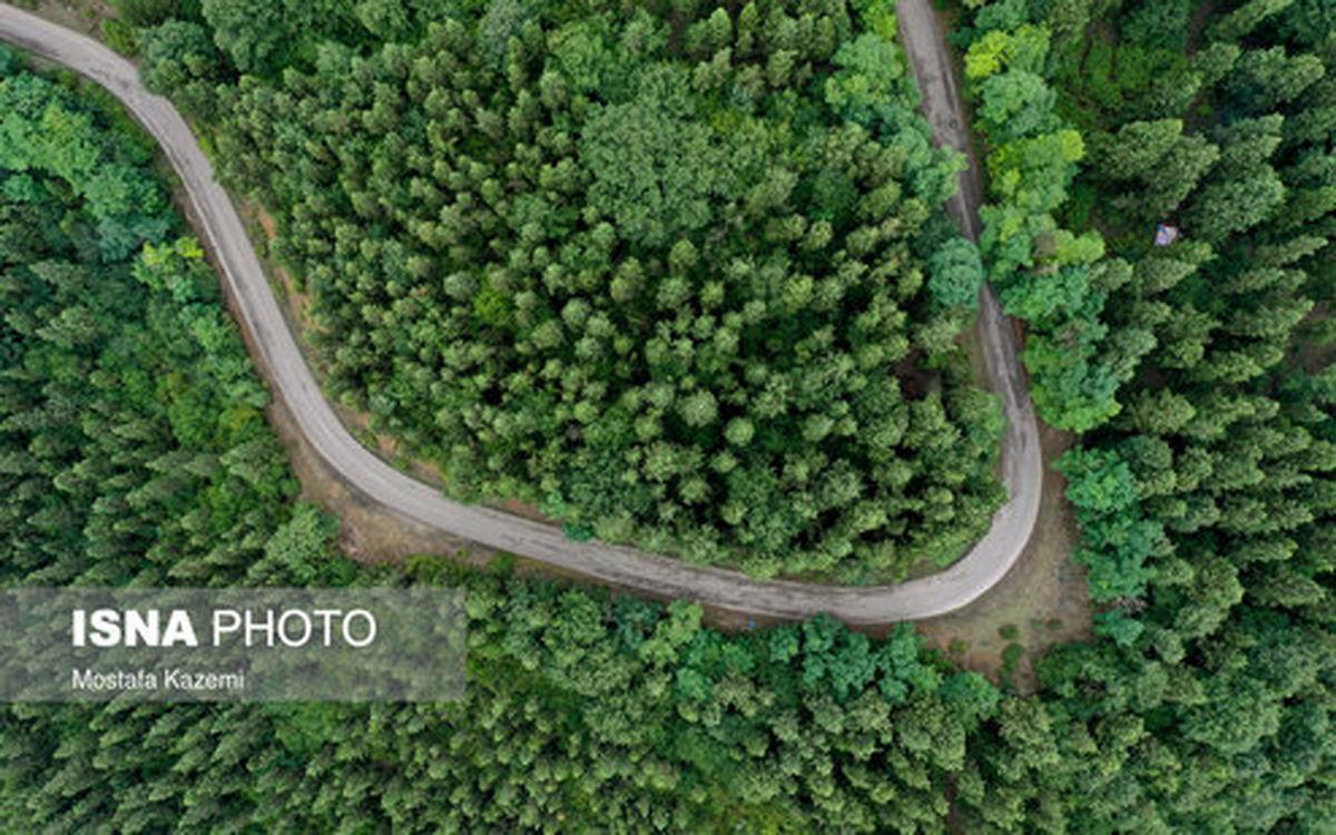 تصاویر: جنگلهای آقمشهد