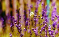 ۳۵ گل که در فصل تابستان به خوبی رشد میکنند