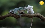 تصاویر: قورباغه موش را نخورد و با آن دوست شد!