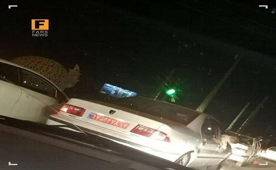 ماجرای سگگردانی با خودروی پلاک دولتی +عکس