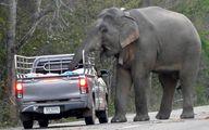 فیل گرسنه ترافیک راه انداخت +عکس