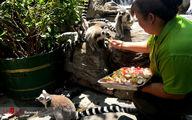 تصاویر: باغ وحش پکن در فصل تابستان