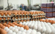 افزایش هزار تومانی نرخ تخم مرغ در بازار