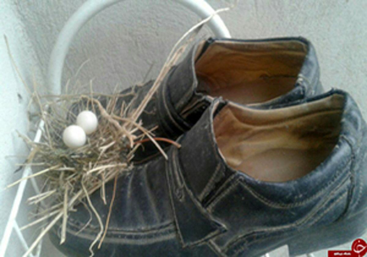 ماجرای جالب پرندههایی که پسری را مجبور کردند تا کفش پدرش را بپوشد +فیلم