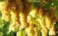 برای تسکین کمر درد این میوه را بخورید