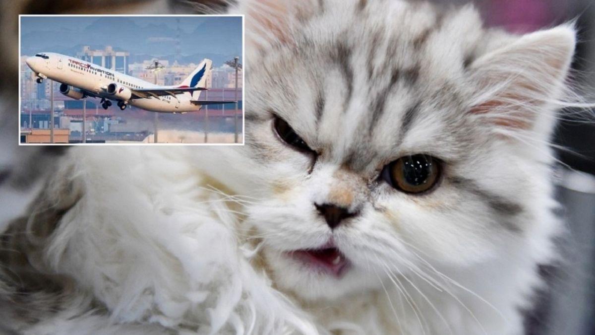 فرود اضطراری خلبان بخاطر حمله گربه! +عکس