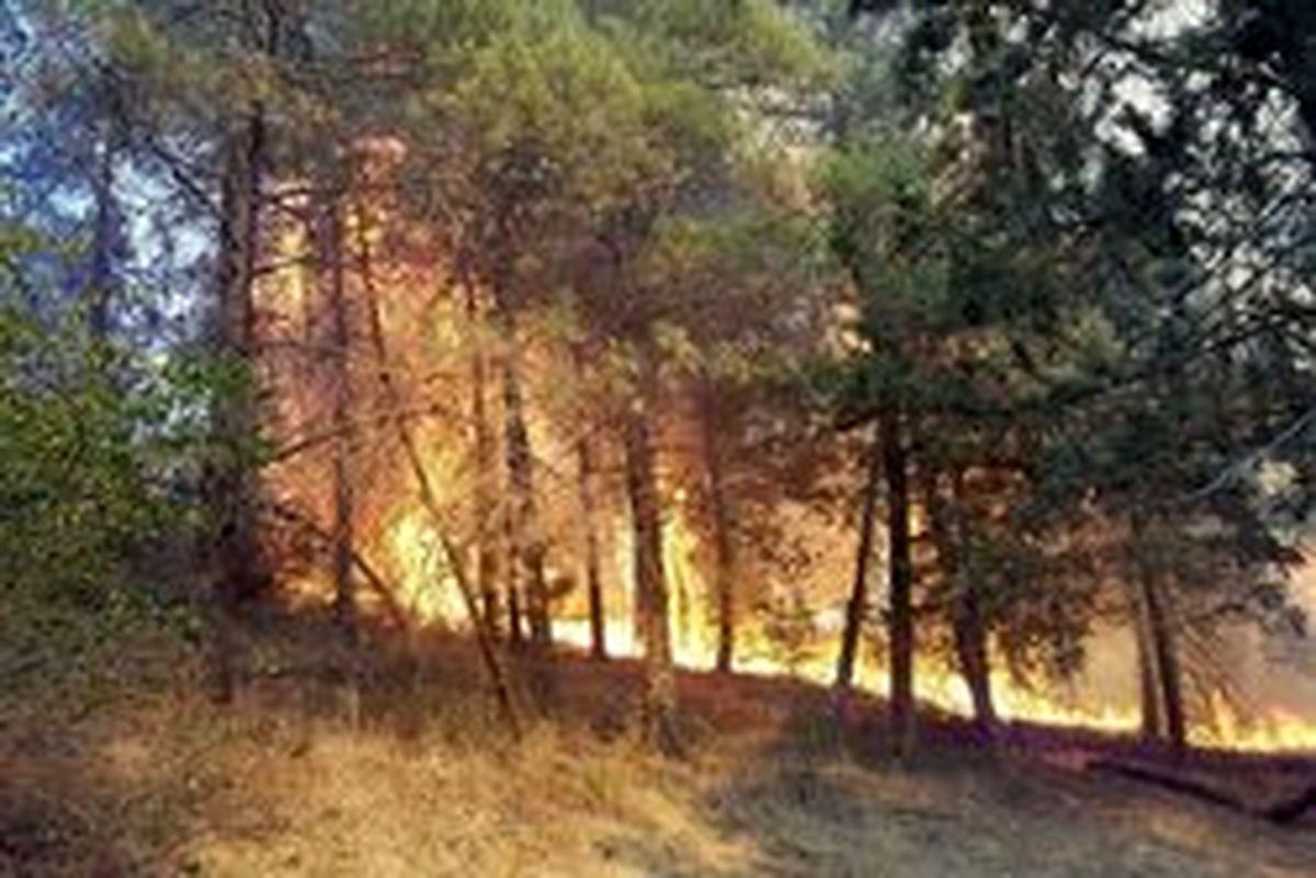 جنگل ابر آتش گرفت/ دومین حریق در ۴۰ روز اخیر