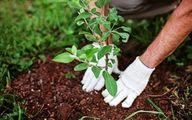 ۱۰ مرحله ساده که باید در هنگام کاشت درخت رعایت کرد
