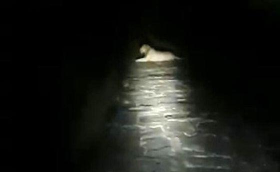 حضور سلطان جنگل در وسط جاده راننده را میخکوب کرد +فیلم