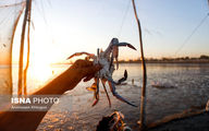 تصاویر: صید «مشتا»