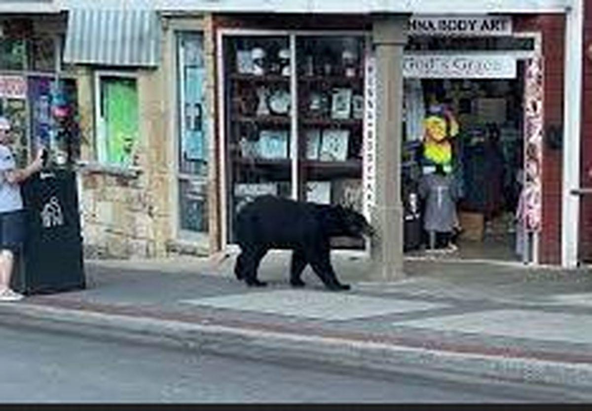 ورود خرس گرسنه به رستوران، مشتریان را شگفت زده کرد +عکس