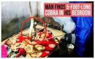 خزیدن شبانه مار به تختخواب مرد هندی را به وحشت انداخت! +فیلم