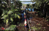 تصاویر: آمازون و کرونا
