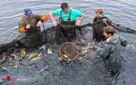 تصاویر: ماهیگیران مشغول صید ماهی