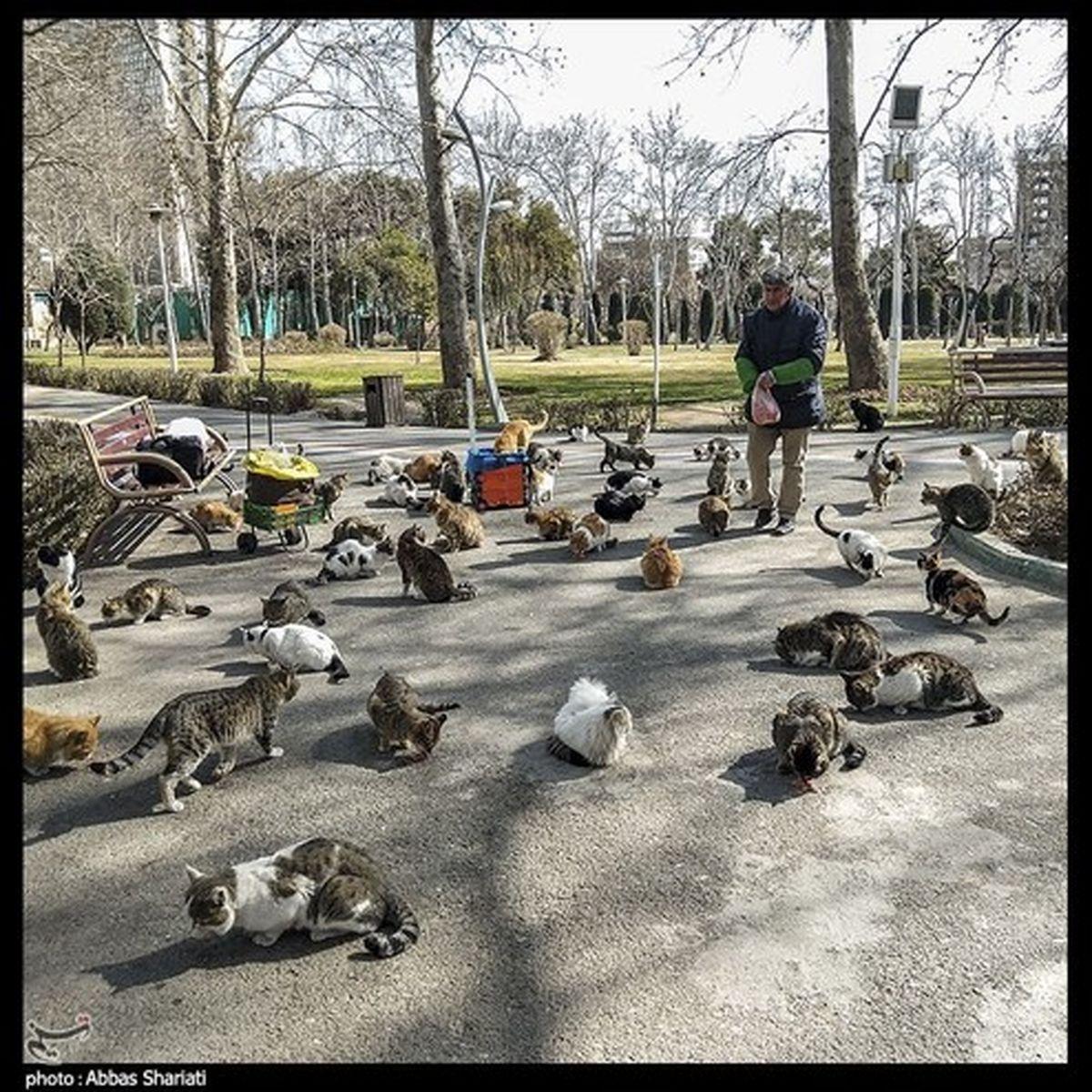 عکس: کار خیر یک هموطن برای گربه های شهر