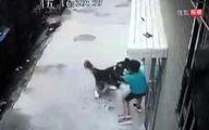 حمله سگ هاسکی به پسربچه ۶ ساله در خیابان + فیلم