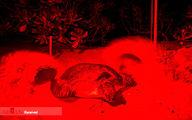 تصاویر: نجات لاک پشت ها
