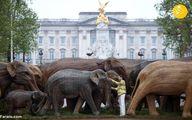 یک گله فیل مقابل کاخ ملکه انگلیس