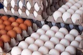 تخم مرغ هم لاکچری شد!/رییس اتحادیه: ارزان نمیشود