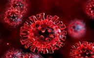 از این پس هر ویروس کرونایی کرونای انگلیسی است!