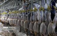 تصاویر: مرغ از کشتار تا بازار!
