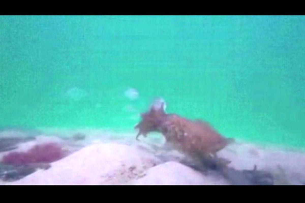 فیلم: لحظه شکار یک سپیداچ یا همان دهپا