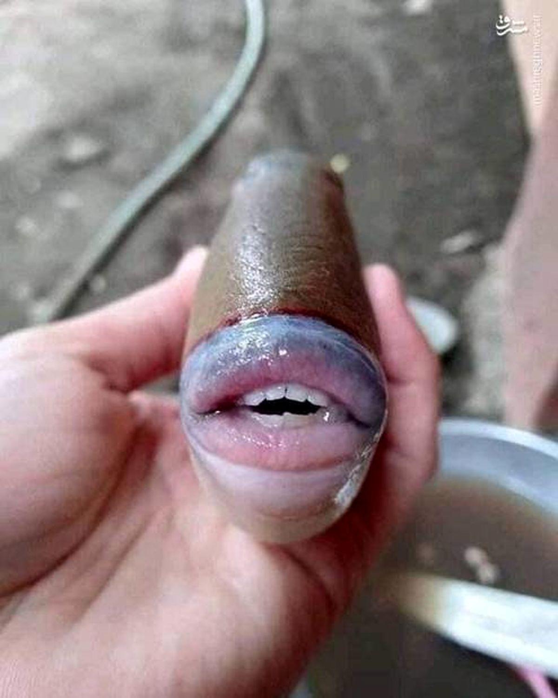 ماهی با لب و دندانی شبیه انسان +عکس