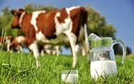 دامداران شیرخام را گران میفروشند +سند