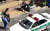 روایت یک شاهد از رفتار خشن زن جوان با خودروی پلیس +تصاویر و فیلم