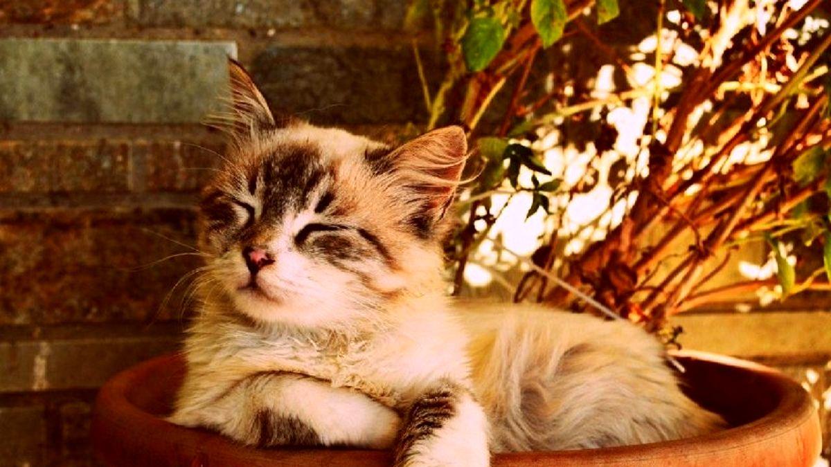 گربه خانگی قهرمان جان دو کودک را نجات داد! +عکس