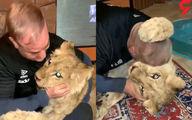 شیر وحشی حیوان خانگی مرد قزوینی! +عکس و فیلم باورنکردنی