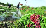 چرایی افزایش قیمت سبزی
