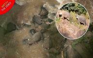 غرق شدن گله فیلها بر اثر سقوط از آبشار+ فیلم