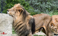 تصاویر: حیوانات باغ وحش کرواسی