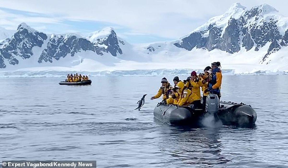 لحظه باورنکردنی پرش به موقع  پنگوئن به درون قایق  ازدست شکارچیانش +فیلم