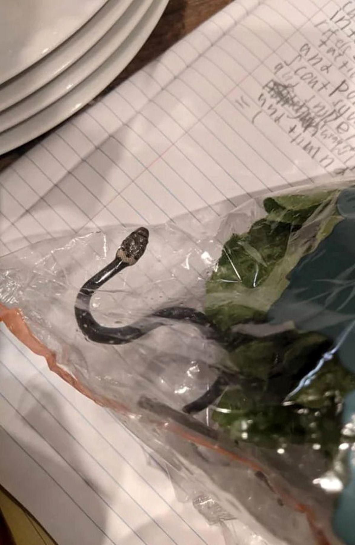 پیدا شدن مار زنده در بسته سالاد! +عکس