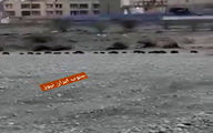ویدئویی تاثربرانگیز از هجوم گرازهای تشنه به شهر میناب!