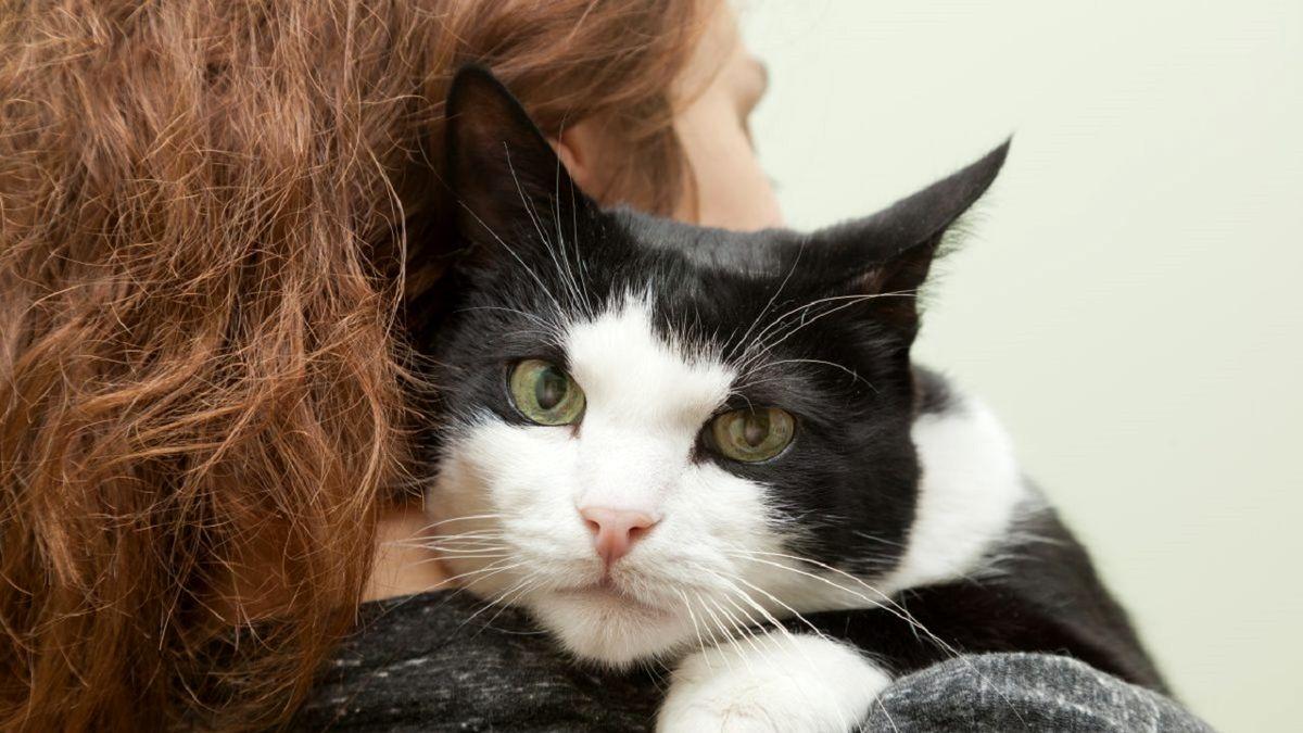 گربه خانگی در شکم مار پیدا شد! +عکس