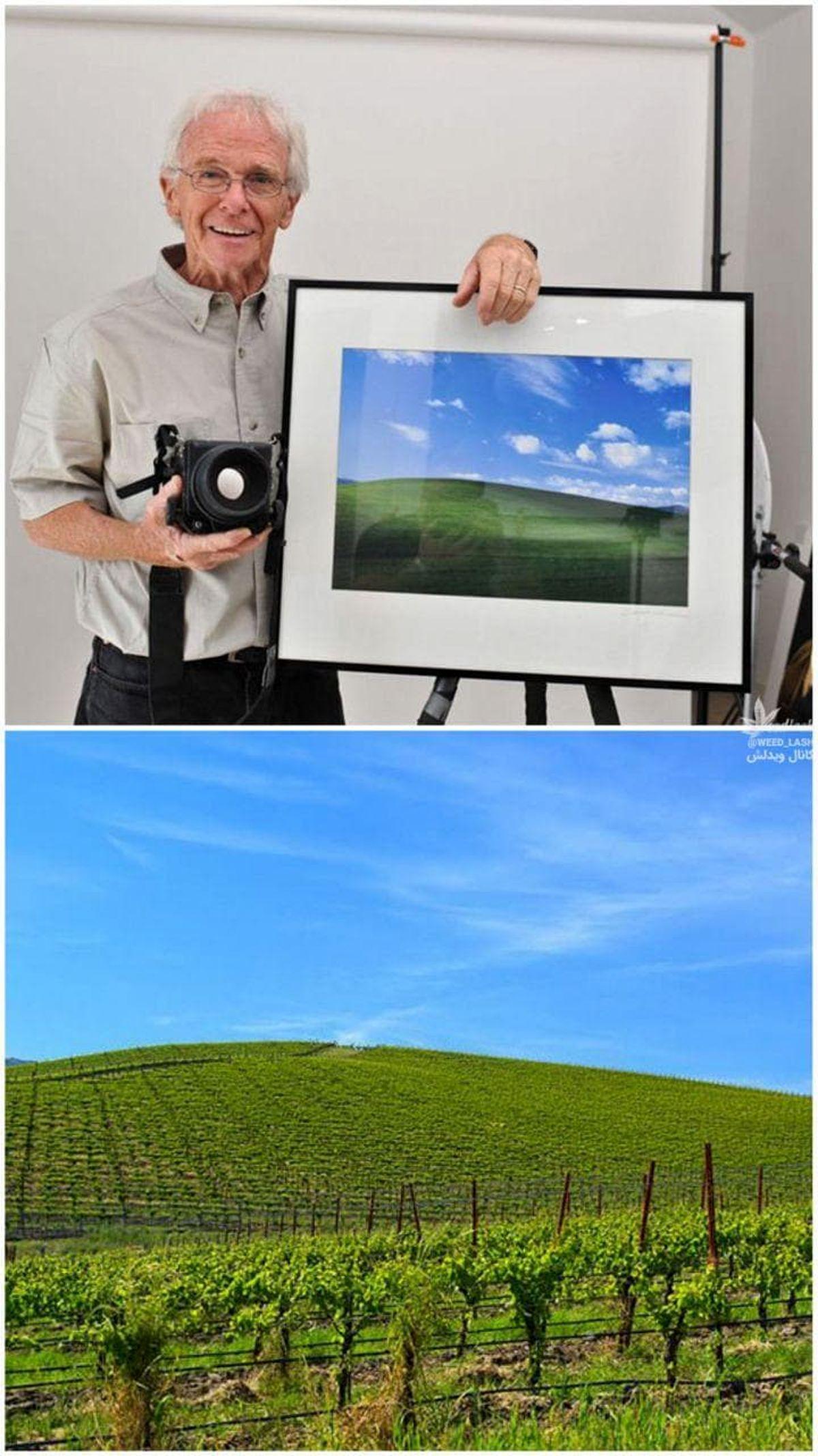 عکس معروف بکگراند ویندوز XP کجاست؟ +عکس