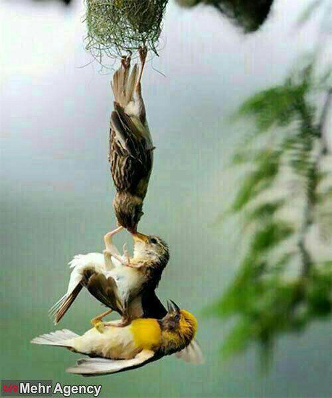 عکس:تلاش بی نظیر والدین برای نجات فرزند