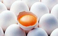 ادامه واردات و ارزانی تخم مرغ در بازار