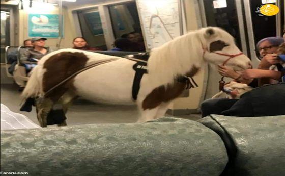 تصاویر: مسافری که با اسب سوار مترو شد!