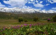 تصاویر: گیاهان دارویی در ارتفاعات دنا