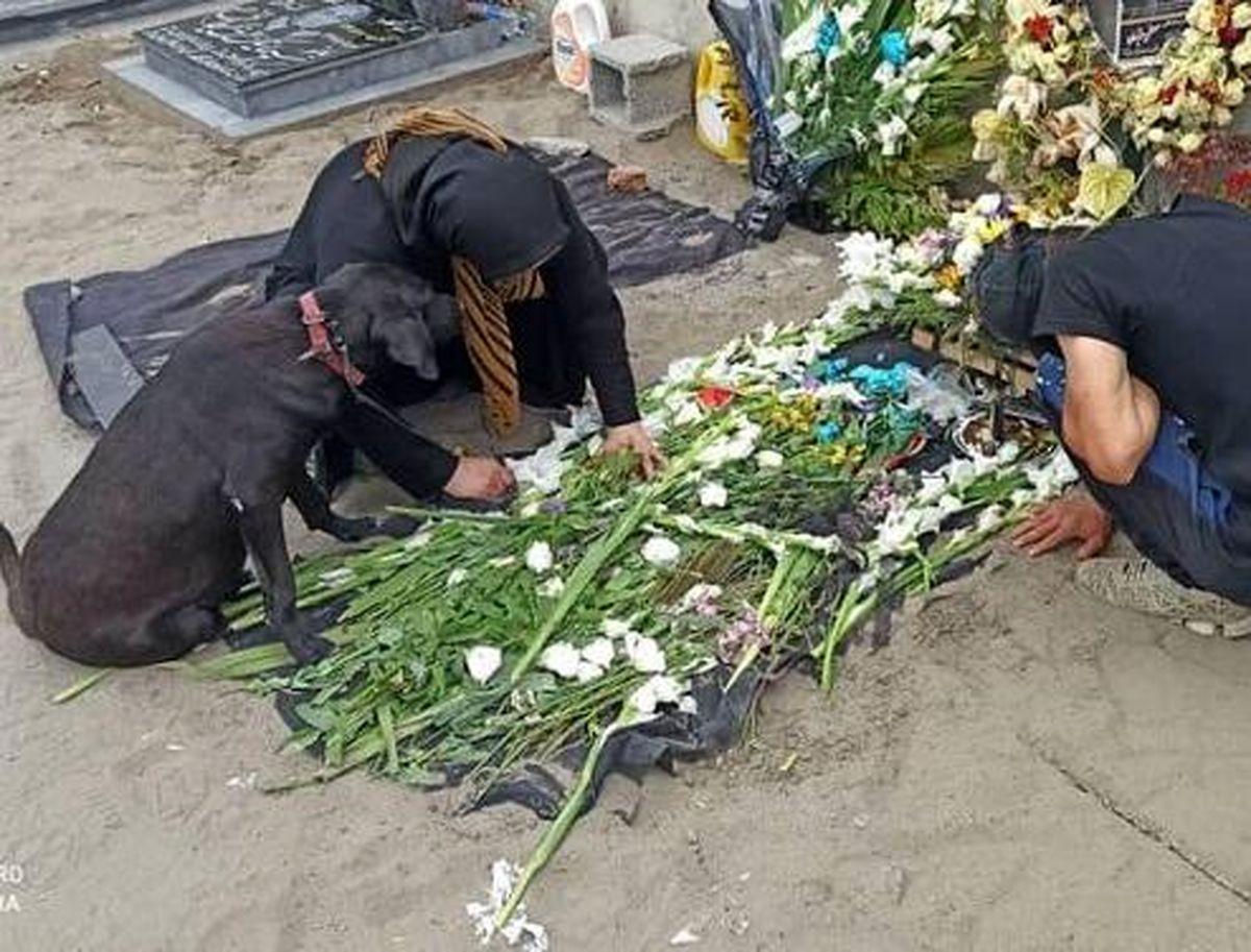 تصویری تلخ از سگ کنار قبر صاحبش در انزلی!